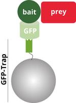 CO-IP partners