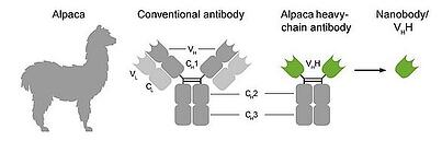 Nanobody Graphic