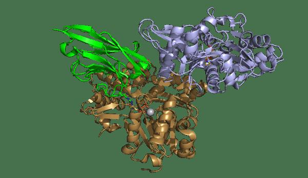 ChromoTek's Nanobody NactNB