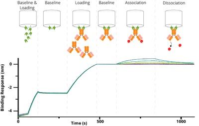 Nano-CaptureLigand Biosensor mit Diagram Spike
