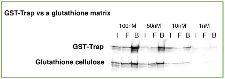 GST_Trap_vs._Glutathione.jpg