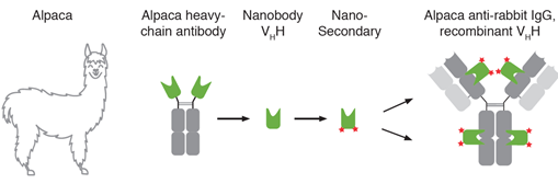 Technology Nano-Secondaries