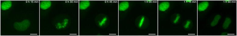 Chromatin dynamics copy.jpg