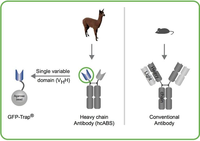 Crazy antibodies170906.jpg