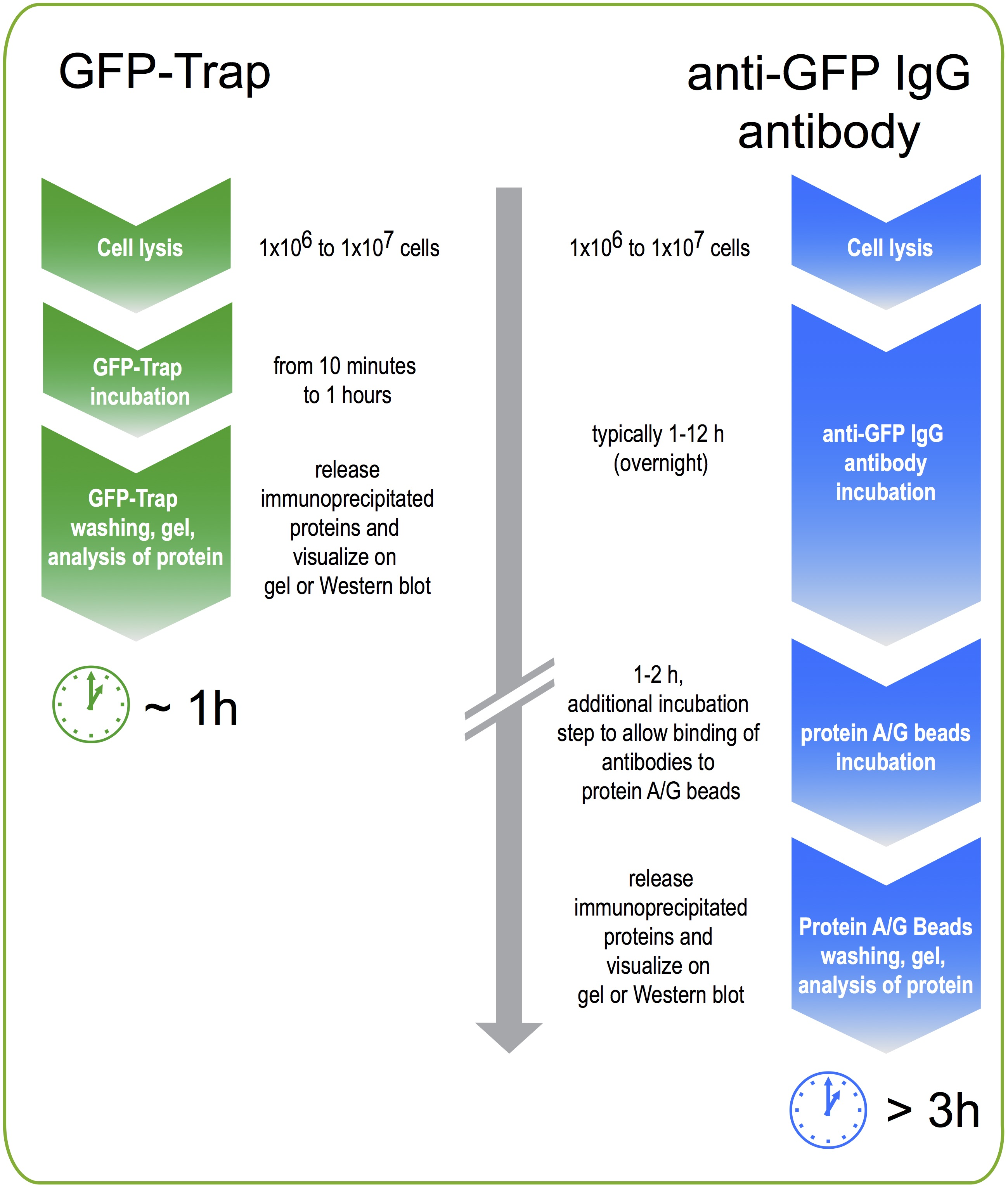 Workflow GFP-Trap vs GFP antibody170906.jpg