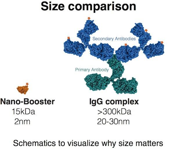 IgG complex, VHH.jpg